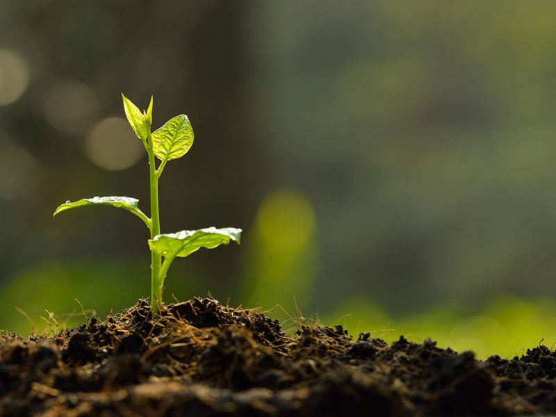 sustainable-growth-marketing
